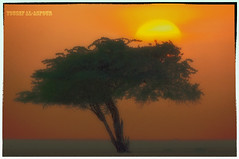 "Just an ART :) (ٌYousef Al-Asfour) Tags: abstract art nature beautiful wow photography nikon kuwait nikkor top25fav magical nikondigital highlight breathtaking peacefull photooftheday naturesfinest thebigone wonderworld blueribbonwinner supershot vwc nikonians outstandingshots hfv nikonstunninggallery specanimal abigfave sellective outstandingshotshighlight kuwaitphotographer worldbest shieldofexcellence platinumphoto anawesomeshot anawesomeshotb impressedbeauty aplusphoto superbmasterpiece ""superbmasterpiece"" naturefinest natursfinest diamondclassphotographer flickrdiamond ysplix amazingamateur excellentphotographerawards jalalspagesnaturealbum creativephotographers theunforgetablepicture ~vivid~ naturewatcher kvwc bfgreatesthits kuwaitvoluntaryworkcenter مركزالعملالتطوعي kuwaitvwc nginationalgeographicbyitalianpeople ""nikonflickraward"" yousefalasfour alasfour2000 يوسفالعصفور"
