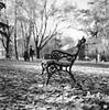 bench I (Banilia) Tags: 6x6 scan rodinal timisoara yashicamat foma