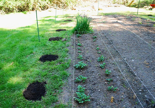 expanding garden 1