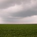 green field, grey sky