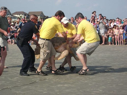 Sea Turtle Release - South Carolina Aquarium