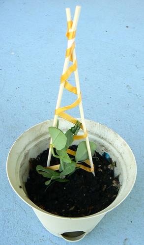 pea, trellis, gardening, tutorial, diy, how to, patches,  phlox,  panties