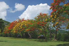Martinique (mhp75) Tags: france martinique antilles carabes