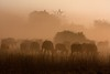 20090904 Chobe 079 (blogmulo) Tags: africa park travel fauna canon buffalo wildlife viajes national botswana dust bufalo herd chobe f28 okavango 70200mm polvo manada canon450d blogmulo