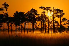 Sunrise (Dave 2x) Tags: usa sunrise florida sony everglades 70400mm sonya900 daveirving httpwwwdaveirvingwildlifephotographycom
