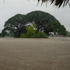 A natural umbrella for torrential rains (Bn) Tags: topf50 riverside broccoli raindrops dondet topf100 tropicalstorm islandhopping rainyseason mekongriver rurallife kapoktree southernlaos monsoonseason wetseason catchingfish torrentialrain 100faves 50faves logboat fourthousandislands letitrain sipandon seetheraindrops torrentialdownpours backpackersparadise heavyrainfall mightymekong fishermanindugout sinisterweather afewhoursheavyrain 14kmwidemekongriver fishermenindugoutcanoe nestledinthebreathtakingmekongriver abeautifullaotiangetaway tropischeregenbui beautyandadventure dondetislandinthemekong lastupto2hours nearborderofcambodia superbnaturalenvironment noelectricityontheisland
