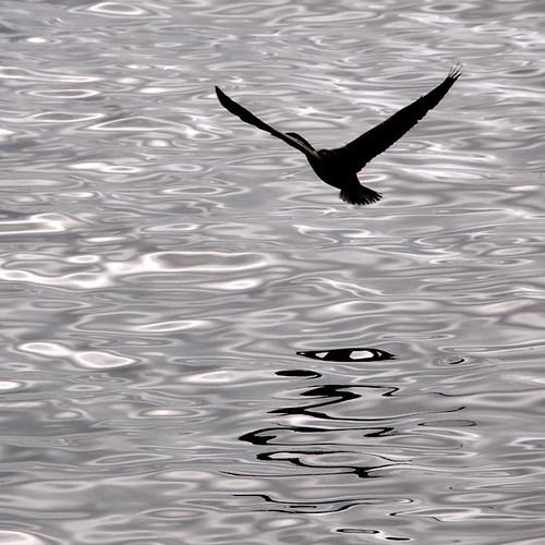 iPad Wallpaper: Bird in flight