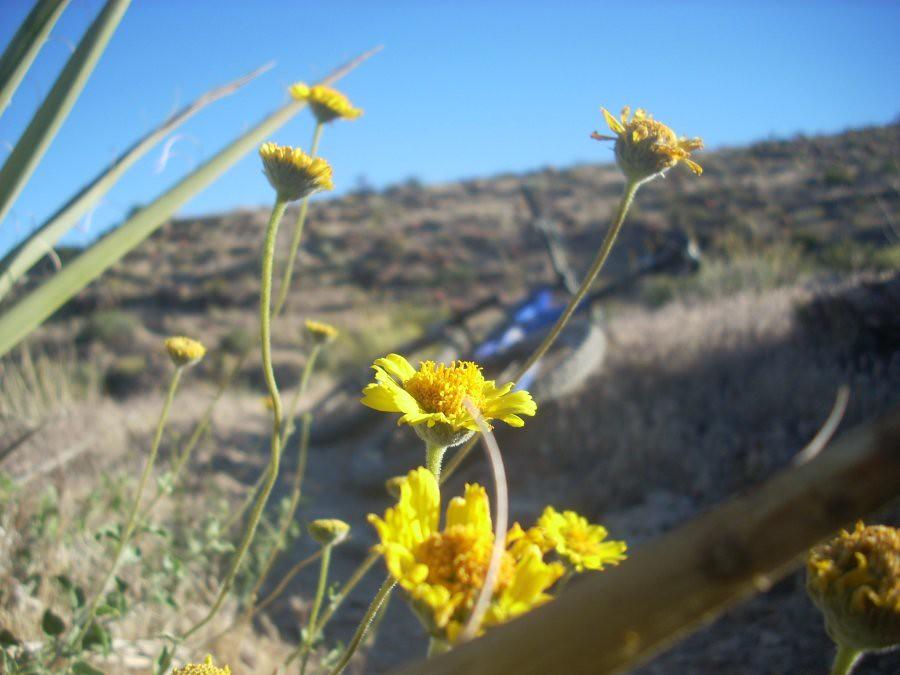 Memorial Day AZ 2010 041