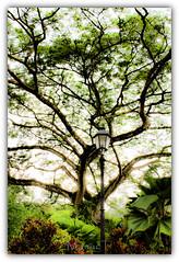 Tree canopy.