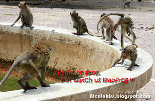 leapfrog monkeys