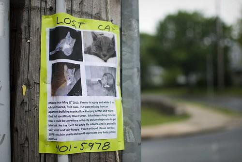 LOST CAT - Timmy