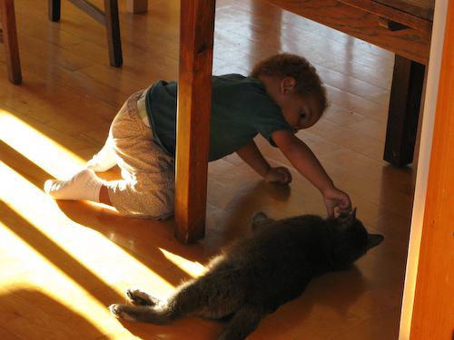 Feeding the cat 2