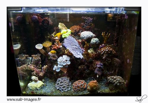 Nano marins vous y croyez ? 4690488629_19f9b4b46b