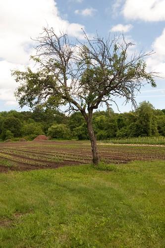 peartree smallfarm