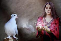 spirit of the dove (AlicePopkorn) Tags: love beauty creativity energy peace venus spirit dove digitalart divine creativecommons awareness magical doves rumi oneness alicepopkorn