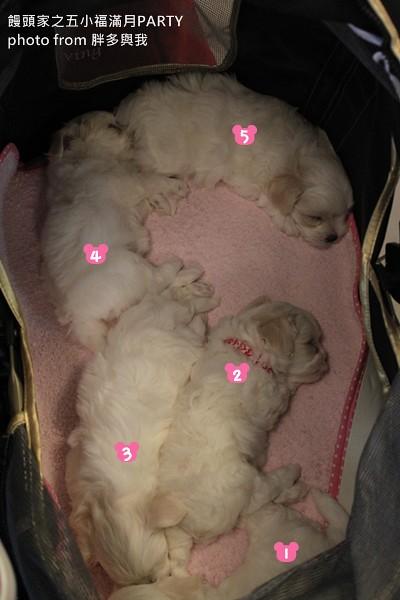沈睡中的五小福