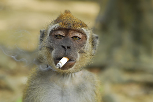 Smoking monkey = Smokey