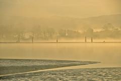 Pitt River Morning 5 (showbizinbc) Tags: mist fog sunrise river golden britishcolumbia mapleridge portcoquitlam pittriver pittmeadows mistymorning colorphotoaward