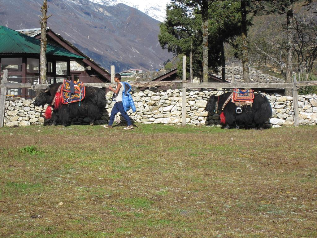 Nepali mounts