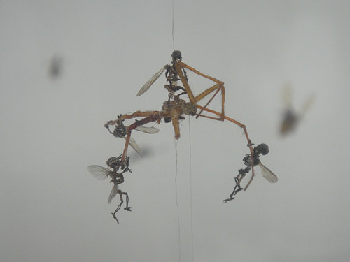 Tessa Farmer - Swarm, 2004. Exhibited at the Newspeak: British Art Now exhibition at the Saatchi Gallery