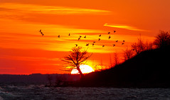 Lake Erie Sunset with Serendipitous Birds at Nanticoke Ontario (Christopher Brian's Photography) Tags: autumn trees sun sunlight ontario canada colour water clouds geese lakeerie nanticoke sigma7020028ex canoneos7d silhouettephotography