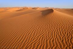 The Sand - Explore (TARIQ-M) Tags: texture landscape sand desert dunes riyadh saudiarabia hdr  canonefs1855        canon400d