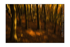 Abstract (Winterspeak) Tags: park wood uk autumn trees england orange sun sunlight abstract blur tree art english fall horizontal rural woodland out landscape gold golden evening countryside woods flora october focus europe arty view britain united country great kingdom sunny blurred cotswolds gloucestershire gb trunk trunks deciduous common stroud effect autumnal beech 2010 glos randwick cotswold standish fagaceae haresfield