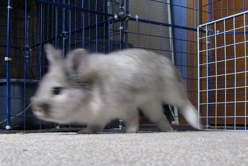 Bunny blur