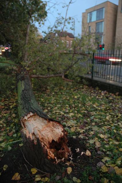 fallen-tree-2