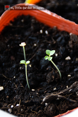 Seeds-sprouting-1