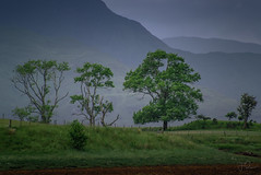 Geology of shore (Coisroux) Tags: mountains trees stratum layers ridges shoreline dusk sctotland ardtur appin scotlanddiscovered d5500 nikond fenceline fences fields beaches lochs lochlinnhe calmness serene