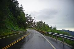 DSC07332 (rc90459) Tags: 最後的夫妻樹 夫妻樹 塔塔加 玉山