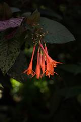 IMG_1820 (d_propp) Tags: muttartconservatory edmonton yegphotos yeggers flower flowers summer 2017