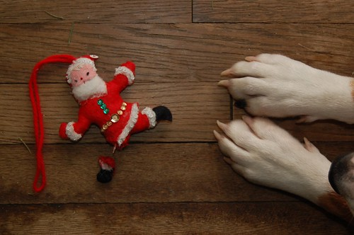 Santa's foot amputation, conducted under non-sterile conditions