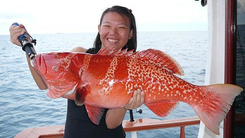 More red grouper