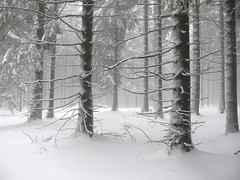 'the sound of silence' (bernd obervossbeck) Tags: schnee trees winter snow tree nature landscape natur landschaft bume baum sauerland