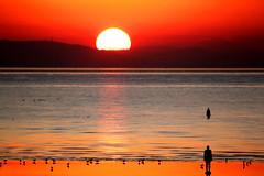 Sunset at Crosby (Zippy's Revenge) Tags: sunset red sea sculpture sun art beach statue liverpool seaside iron cast crosby antonygormley merseyside sefton anotherplace antonygormleys