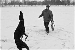Silke-Gompf: Greyhound im Schnee