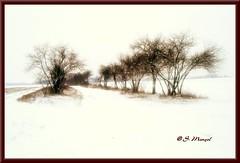 Winter-Allee (stefmen68) Tags: schnee trees winter snow field feld bume allee stefmen68