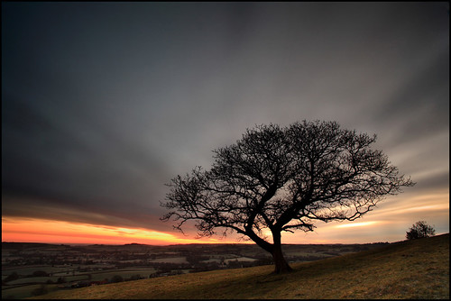 Dawn Blackdown Hill - Dorset (angus clyne) christmas longexposure winter england cloud tree field sunrise dawn one cow oak alone branch cloudy farm bare hill somerset newyear hedge windswept dorset lone lonely bent withered crooked gnarled lonetree flikcr blackdown leefilters colorphotoaward pilsdon pilsdonpen thesecretlifeoftrees