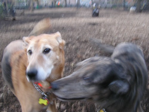 Gratuitious Picture of Happy Dogs