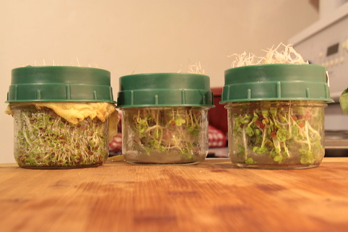 Cheap Tuesday Gourmet: Local winter greens... Sprouts January Cooking Recipes Cheap Tuesday Gourmet