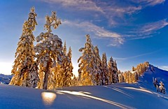 Elfin Gold (Christopher J. Morley) Tags: blue trees winter sunlight snow canada yellow snowshoe hike elfin garibaldiprovincialpark beautifulbritishcolumbia 100commentgroup TGAM:photodesk=winter2012