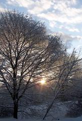 Snow_12010b