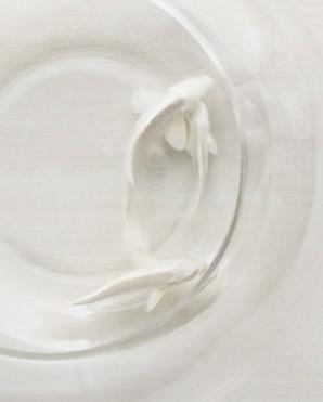 whitefishlauriefrankel