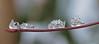 IJskristal (Roelie Wilms) Tags: macro ice cristal ijskristallen ijskristal icecristal weersomstandigheden icecriatals