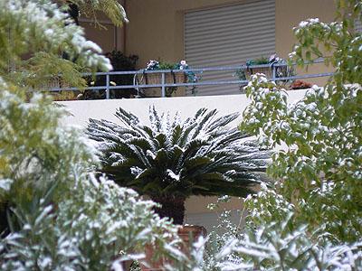 palmier enneigé.jpg