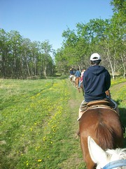follow the leader (DaniL_15) Tags: trees birch saskatchewan horseback dandelions trailriding cypresshills