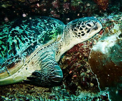 Bunaken Underwater 18