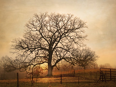 The Corner of the Field (believer9) Tags: light sunset orange tree texture silhouette yellow fence landscape thesecretlifeoftrees